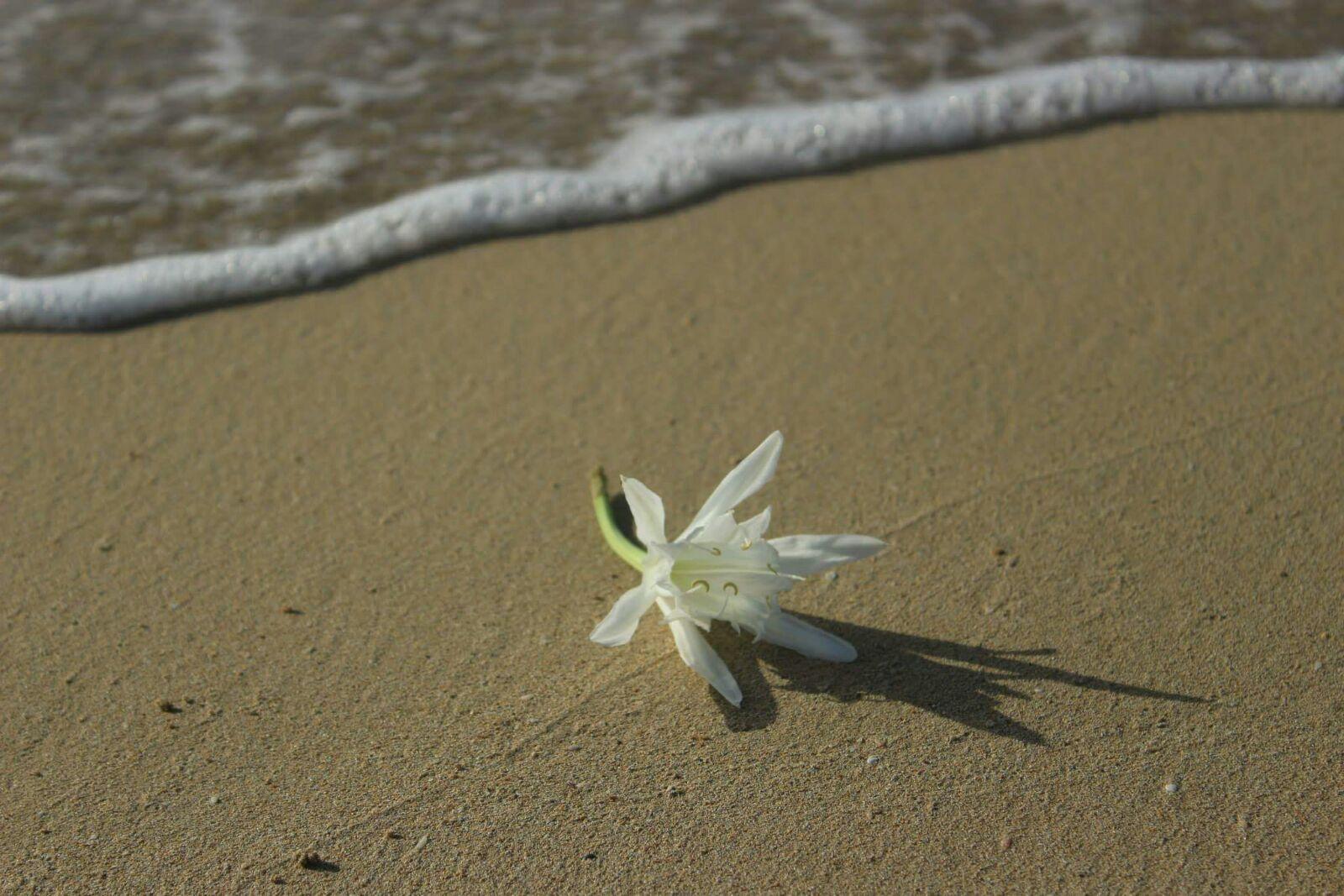 spiagge salentine 2 (matilda qose)