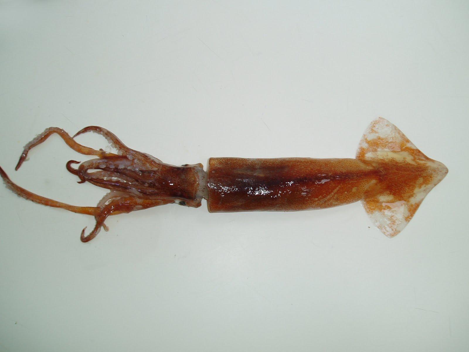 Nueva mirada al mar pez espada for Curiosidades del pez espada