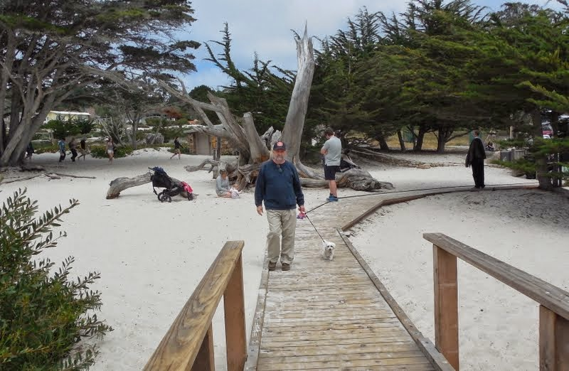 Places To Stay In Big Sur With Dogs