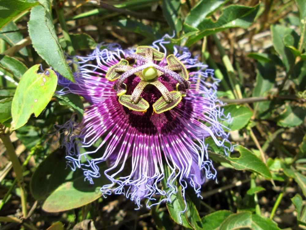 Flores extrañas: las más raras del mundo Taringa!