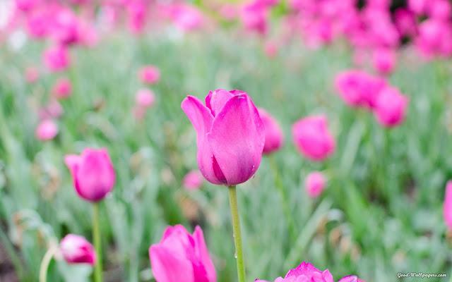Những bông hoa đẹp nhất mùa xuân