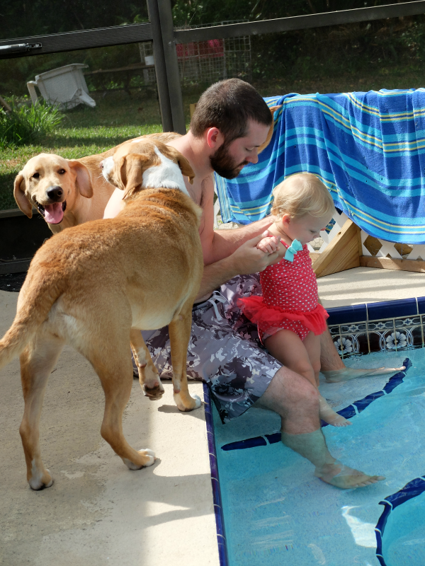 Toddler and pups in the pool
