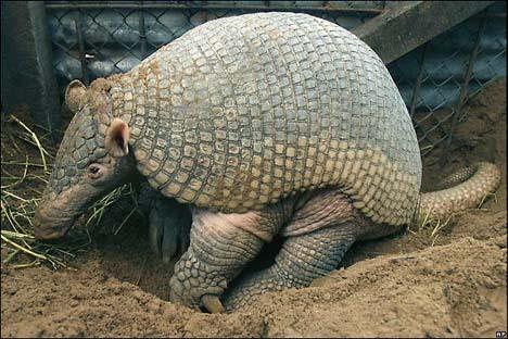 imagenes de animales en via de extincion - ANIMALES EN VÍA DE EXTINCIÓN EN COLOMBIA