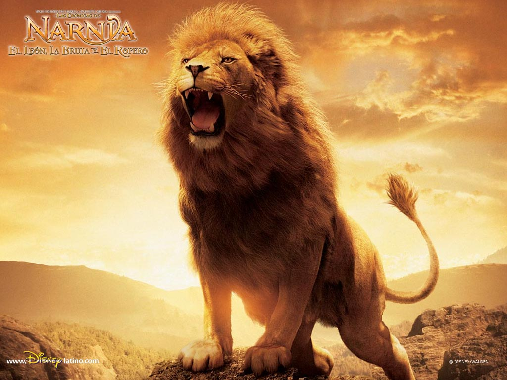 26 Beautiful Amazing Lion The King Of Forest Wallpapers Hd