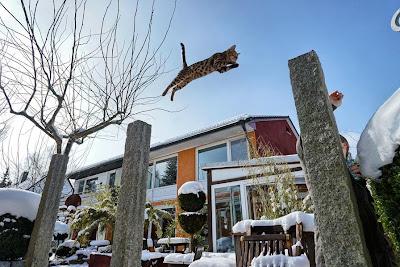 Os gatos são exímios saltadores