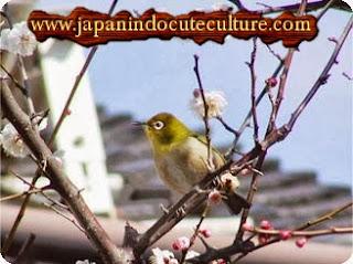 burung di atas pohon sakura