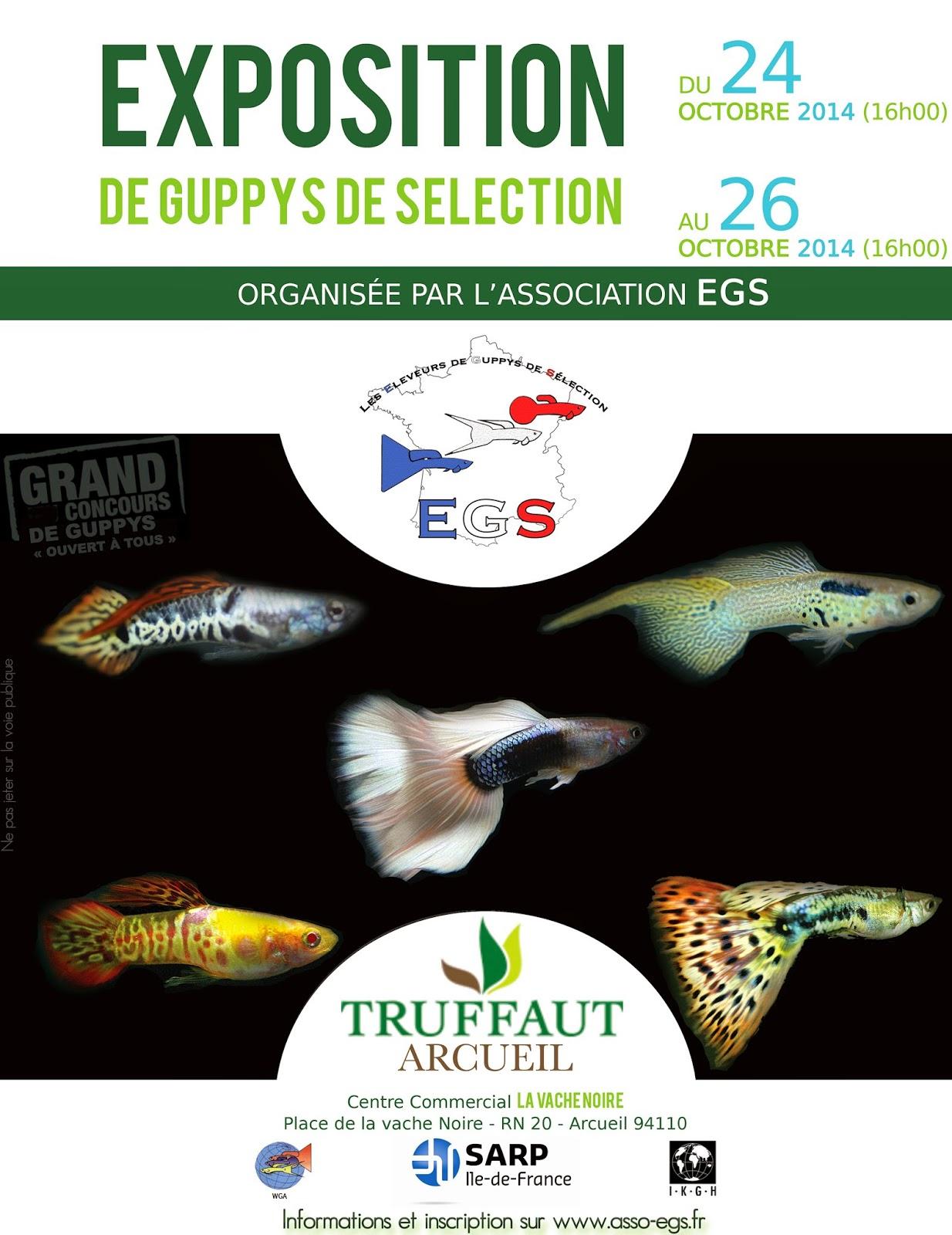 24-26-Octobre-2014-Exposition-Concours-de-Guppys-de-Selection-truffaut-arcueil
