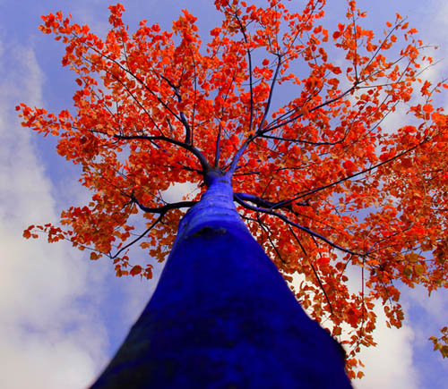 Konstantin Dimopoulos - Blue Trees - Árvores Azuis