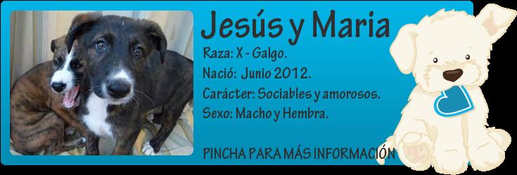 http://mirada-animal-toledo.blogspot.com.es/2014/01/jesus-y-maria-x-galgo-en-adopcion.html