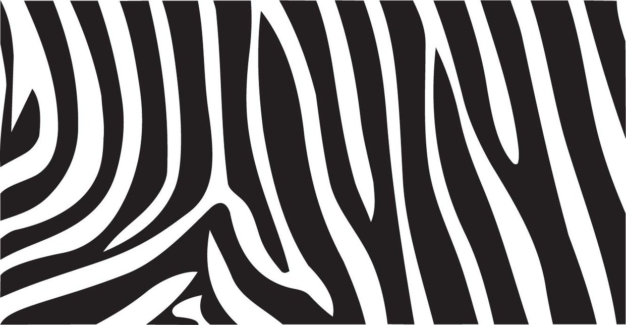 Background White Gallery Background Zebra