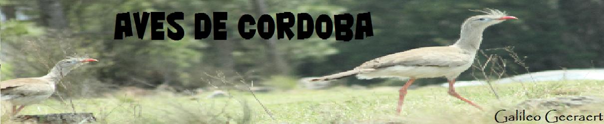 aves de cordoba
