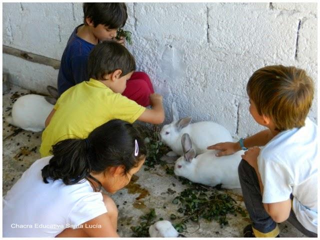 Visitando a los conejos - Chacra Educativa Santa Lucía