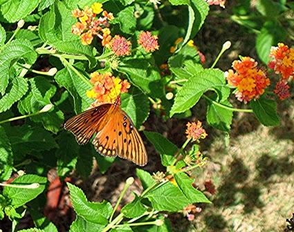 mariposa, riego de plantas, abono barato de plantas