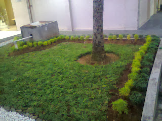 taman dengan material brokoli hias daun kuning