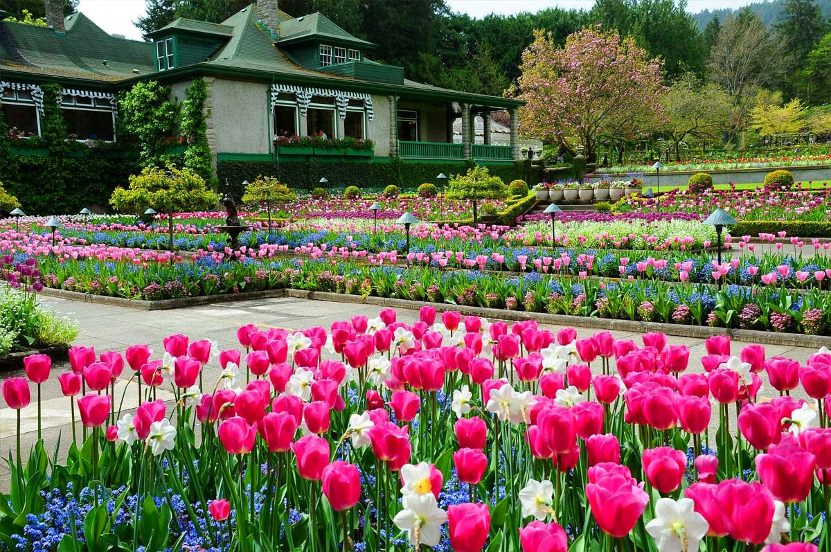 Descubre tu mundo destino los preciosos jardines for Jardines butchart