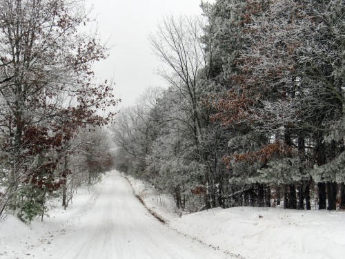 road with frosty trees