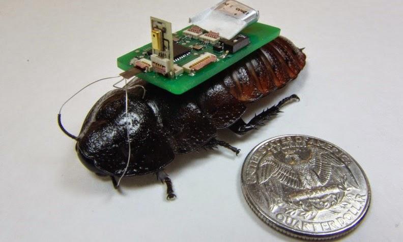 Cyborg cockroach developed by North Carolina State University