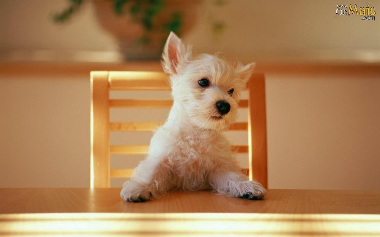 imagenes de animales cachorros - Cachorros de animales salvajes Posters en AllPosters com ar