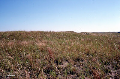 central North American grasslands