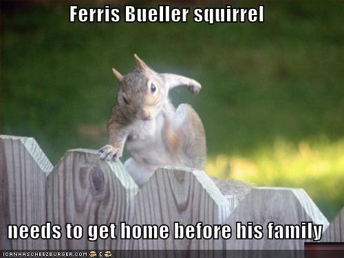Weird Funny Photos: Ferris Bueller Squirrel