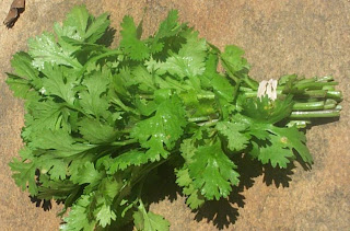 Daun Parsley,Pasli