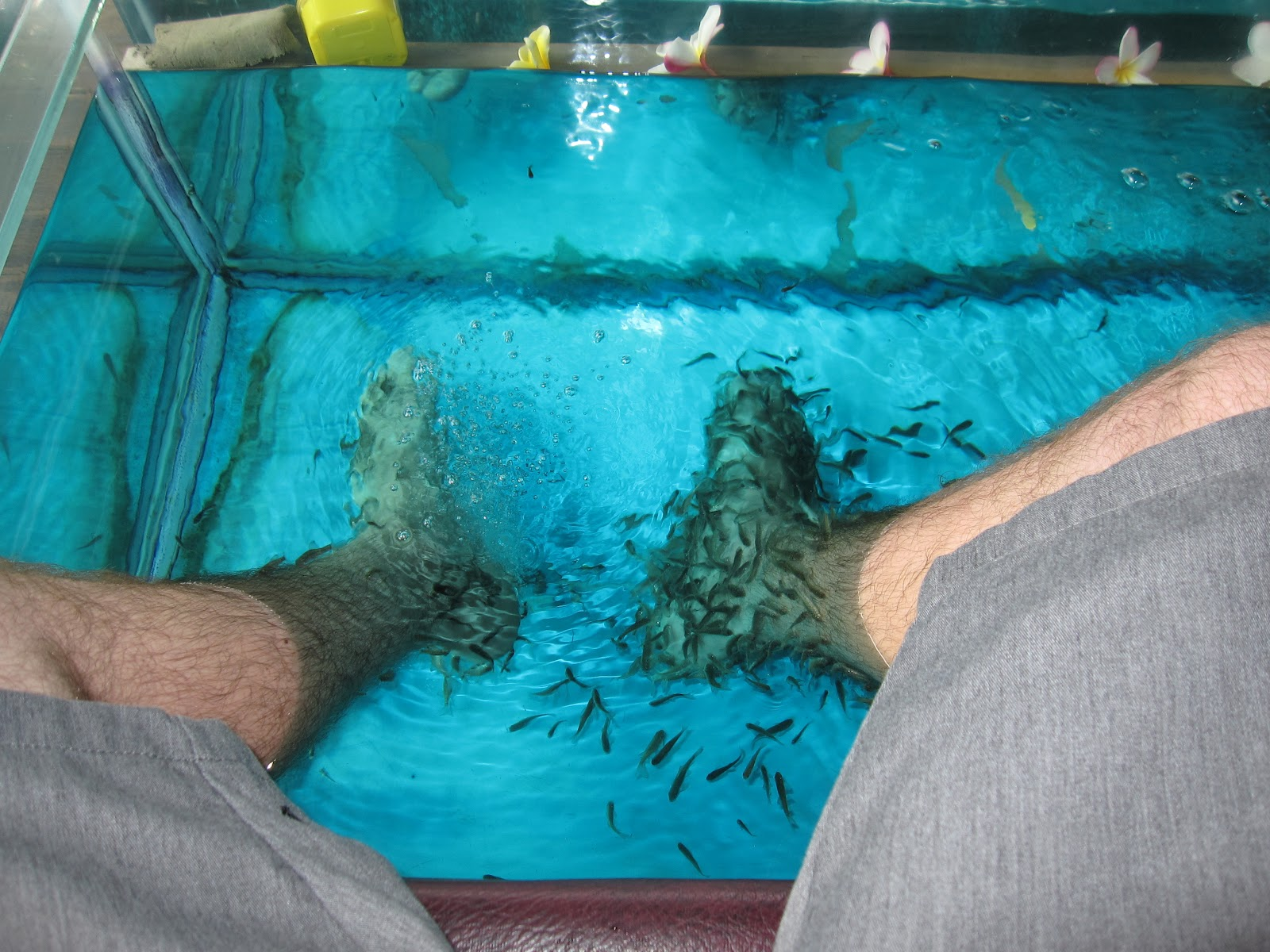 The antsy travelers bali fish spa for Fish foot spa