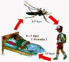 informasi tentang penyakit demam berdarah