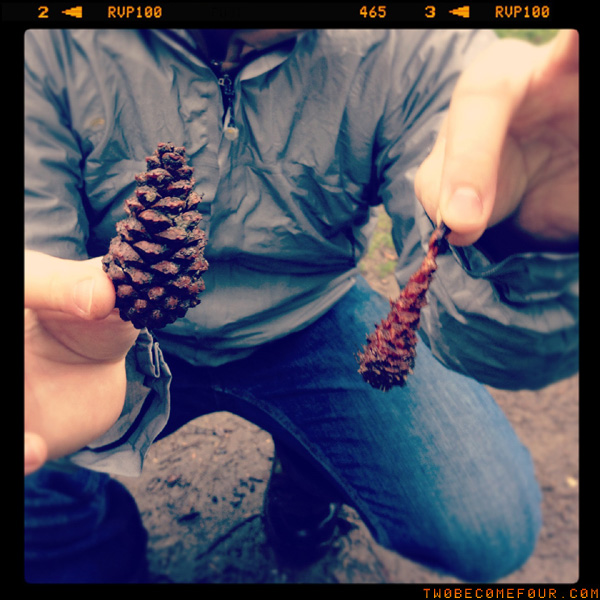 squirrel-nibbled pine cones