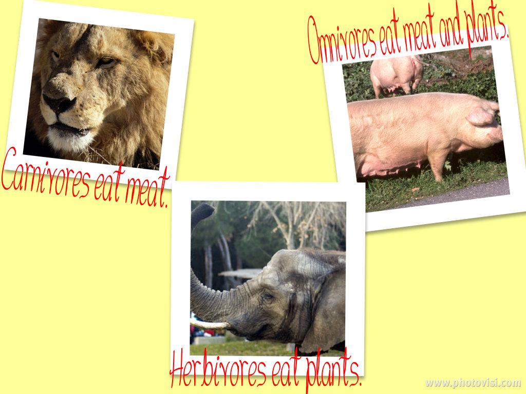 Omnivores animals list