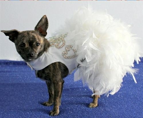 We Are Your Dog Wedding Dress Headquarters