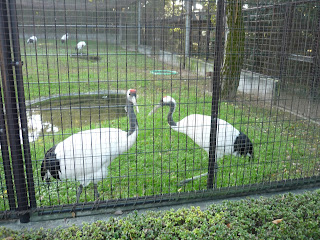 Red-crowned cranes in an aviary in Korakuen Garden, Okayma