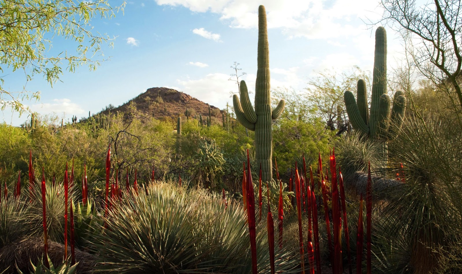 Phoenix (AZ) United States  city pictures gallery : ... Phoenix. A voyage to Phoenix, Arizona, United States, North America