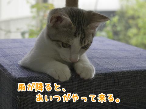 キャットタワーの穴から顔を出す猫