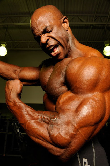 professional bodybuilder steroid cycles