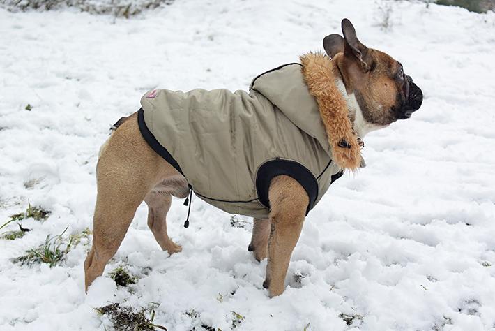 Jacken fur englische bulldoggen