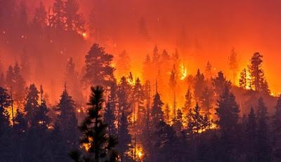 ISIS celebra (mas não assume) incêndios da Califórnia, Espanha e Portugal