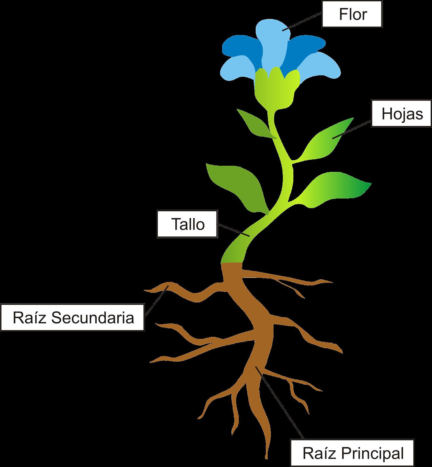 Partes de la Planta para Niños - Taringa!