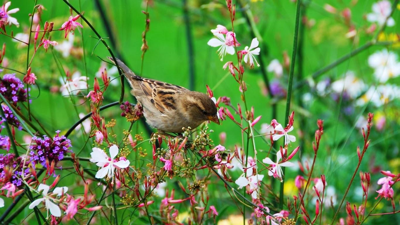 El cuidado de las plantas y el jardin