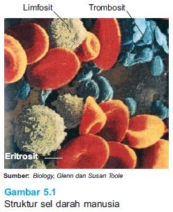 Struktur Sel Darah Merah Sebagai komponen struktur peredaran darah manusia