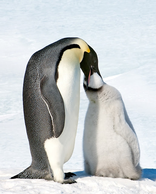 funny penguin photos