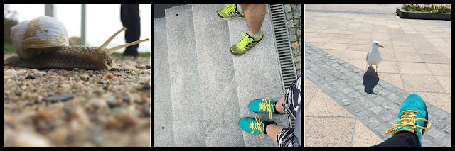 Schnecke Joggen Schuhe Turnschuhe Möwe Urlaub Kühlungsborn