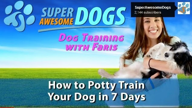 how to paper train your puppy, potty training your puppy, potty training a puppy with pads, potty training a pitbull puppy, potty training puppy apartment, potty training a dog, how do i potty train my puppy, how to potty train a puppy to go outside, potty training for dogs in apartments, potty training for dogs video, potty training for dogs in 7 days, potty training for dogs tips, potty training for dogs crate, potty training for puppies, potty training small dogs, potty training dogs for dummies