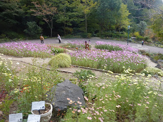 Four seasons Garden with lots of tall pink and yellow flowers as seen at the Nunobiki Herb Garden, Japan