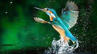 נפלאות עולם הציפורים