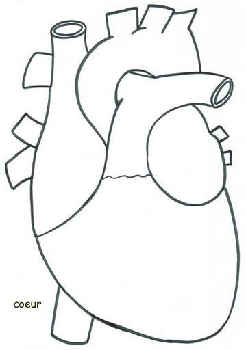 Con el reciclaje aprendemos a conocer nuestro cuerpo - Dessin du coeur humain ...