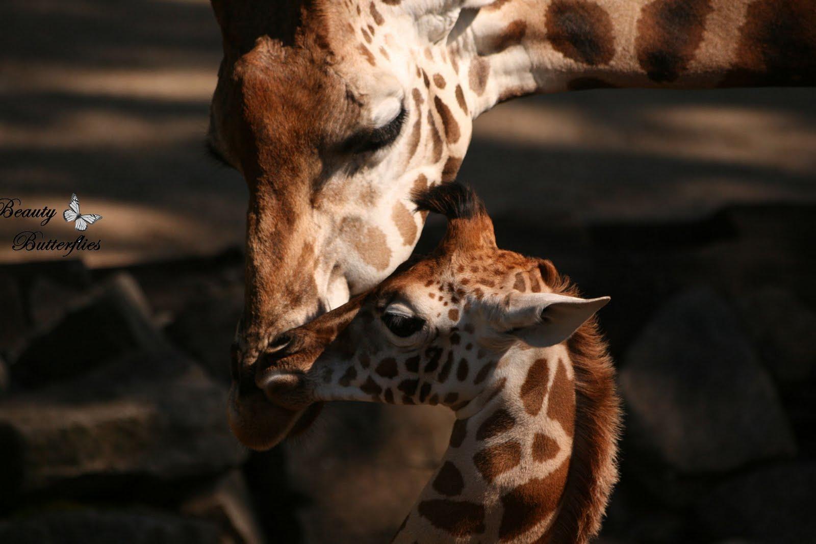[Hannover] Sambesi im Zoo