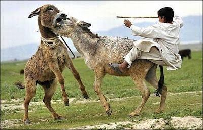 funny_picture_donkey_and_boy