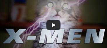 Картинки по запросу X-MEN (Cute Kitten Version)