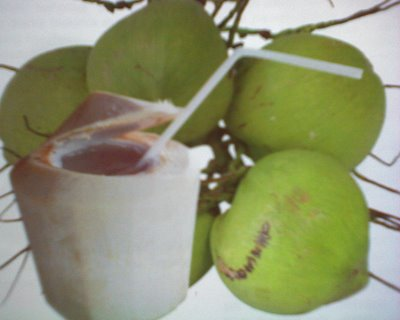 How Mant Times Can I Drink Coconut Water A Day