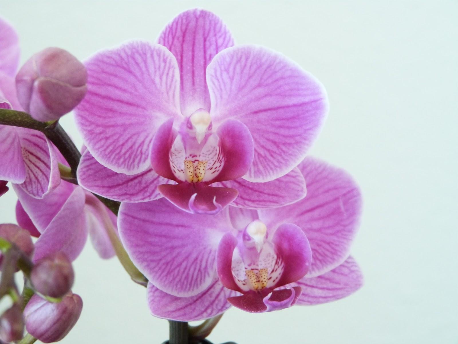 Het brocante schelpenhuisje: orchidee